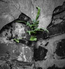 The Little Fern That Could by O.L.Sanders Photography