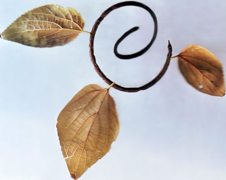Organic-spiral