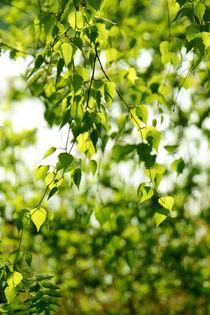 Frühlingsgeflüster von pichris