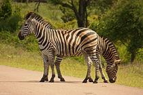 southafrica ... Doppelkopf von meleah
