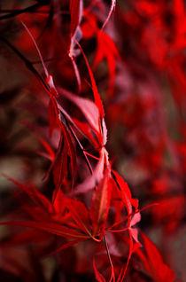 Herbstenergie by pichris
