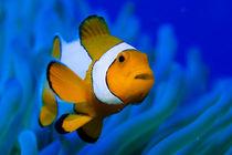 Nemo by Michael Moxter