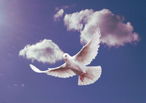 White Dove of Peace. von Heather Goodwin