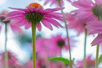 Himmelblau und rosarot von mit-licht-und-liebe