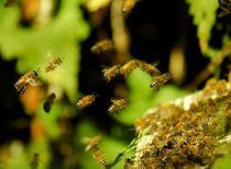 Bienennest von markusBUSCH FOTOGRAFIE