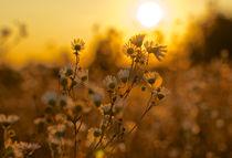 Relaxing fall by markusBUSCH FOTOGRAFIE