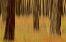Herbstwald abstrakt von markusBUSCH FOTOGRAFIE