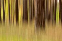 Herbstwald abstrakt by markusBUSCH FOTOGRAFIE