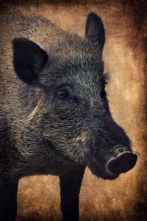 Wildschwein von AD DESIGN Photo + PhotoArt