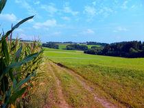 Kornfeld, Wanderweg und Panorama | Landschaftsfotografie by Patrick Jobst