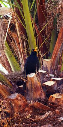 Der Sänger auf der Palme, The singer on the palm tree von Sabine Radtke