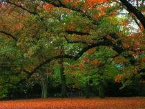 Herbstglühen by Ulrike Ilse Brück