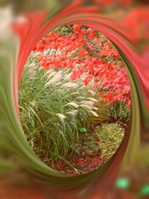 Acer and Bamboo. von Heather Goodwin