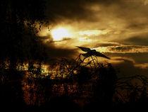 Dark Sunset von Stefanie Feldhaus
