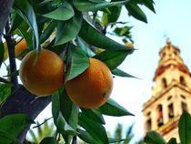 Orange garden of the Mezquita  by Albert Blauhorn