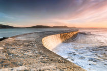 Sunkissed Cobb at Lyme Regis von Chris Frost