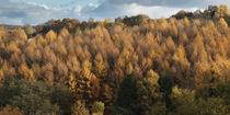 Larch Cottage Panorama von David Tinsley
