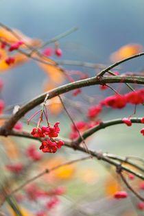 Die Kunst des Herbstes by © Ivonne Wentzler