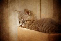 Cat's Eyes #03 von loriental-photography