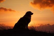 Sundown by Annett Mirsberger