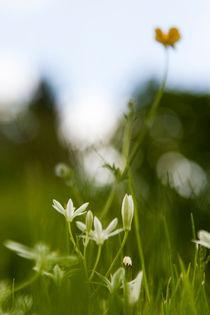 Frühlingsromantik von STEFARO .
