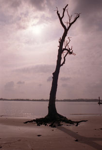 Oeder Baum am Strand by Alex Freyland