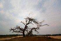 cripple tree by Noémi Giteau