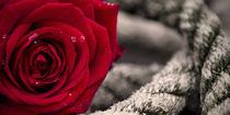 Rope&Rose von Thomas Bytoff
