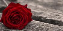 Rose auf dem Steg von Thomas Bytoff
