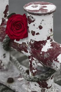 Rose am Festmacher by Thomas Bytoff