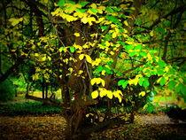 Herbstlichter von Ulrike Ilse Brück