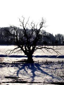 winter tree - winterbaum by mateart