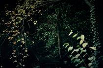 darkness by Henning Hollmann