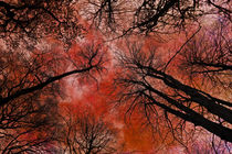 Tree Canopy von David Pringle