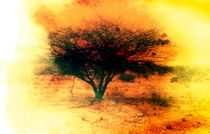 Africa von Giorgio Giussani