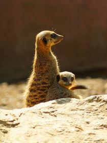 Erdmännchenkind mit Mama, Meerkats mother and child von Sabine Radtke