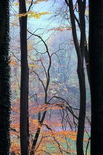 TALL TREE by © Ivonne Wentzler