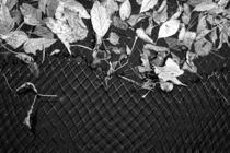 Blätter fischen von Bastian  Kienitz