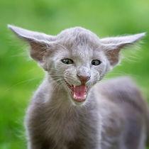 Meow / 2 by Heidi Bollich