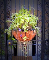 Planter with Fern by O.L.Sanders Photography