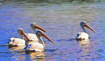 American White Pelicans by Mike Darrah