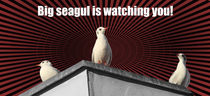 Seagull is watching you! von Henning Hollmann