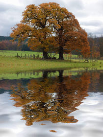 Autumn Tree Reflection by David Pringle