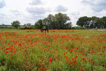 Das Pferd auf der Mohnblumenwiese, Horse on the poppy meadow von Sabine Radtke