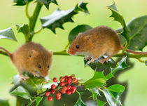 Two Harvest Mice at Christmas by Louise Heusinkveld