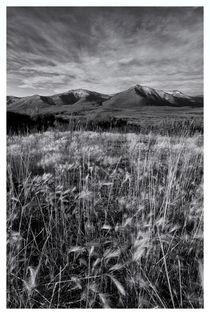 Tundra summer von Priska  Wettstein
