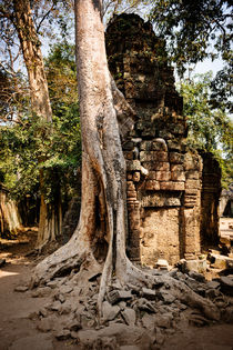 Ta Prohm I by Tom Hanslien
