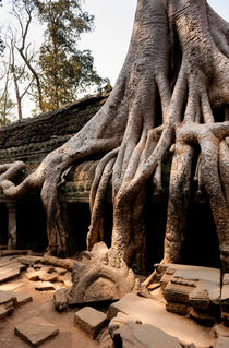 Ta Prohm III by Tom Hanslien