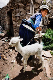 Baby Llama, Maca Village. by Tom Hanslien