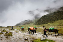 Horsemen along the Salkantay Trek. von Tom Hanslien